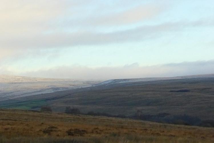 Moorland feeder view