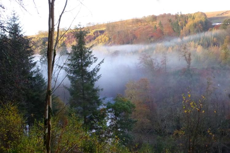 Mist at Broomholm
