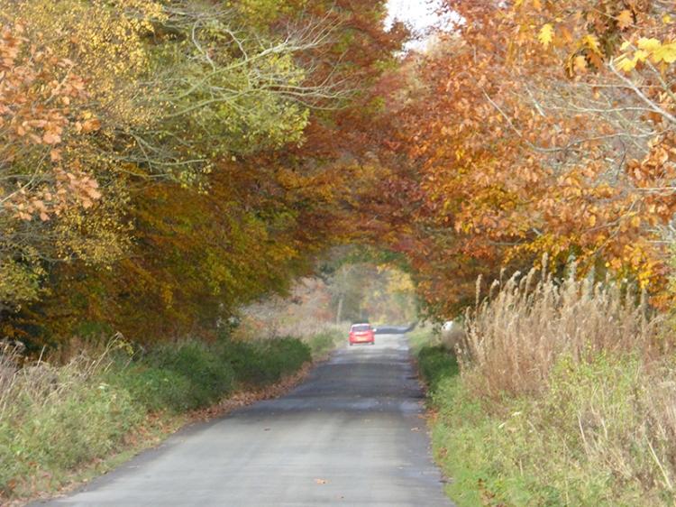 Rockliffe road