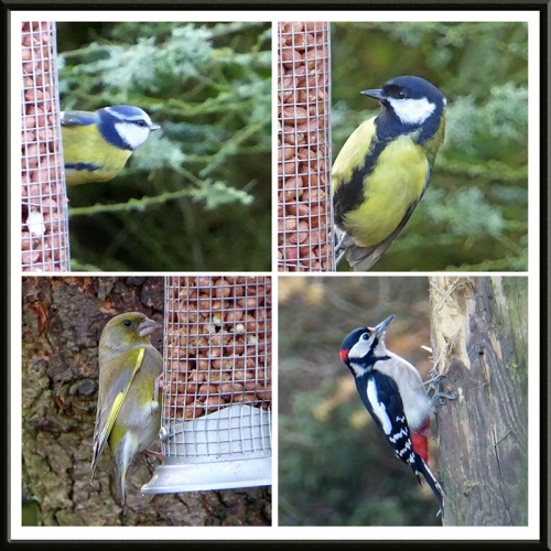 blue tit, great tit, greenfinch and woodpecker