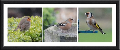 robin, chaffinch and goldfinch