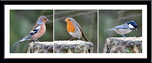 chaffinch, robin and coal tit