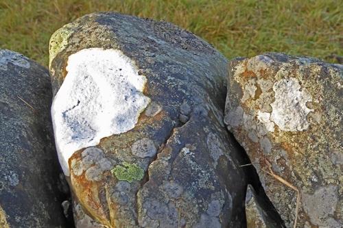 lichen in sun
