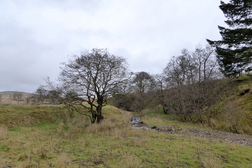 Tree by Glencorf burn