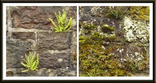 Hallpath wall
