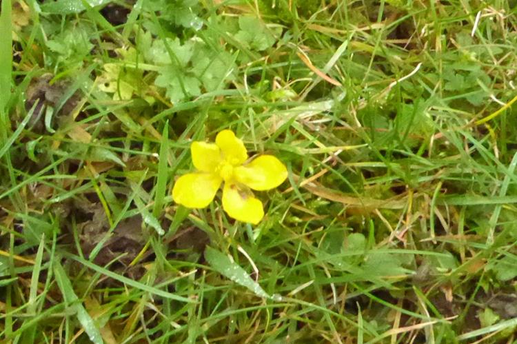 yellow flower december