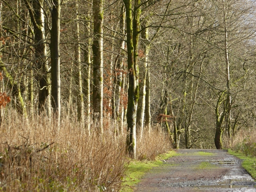 Castleholm road