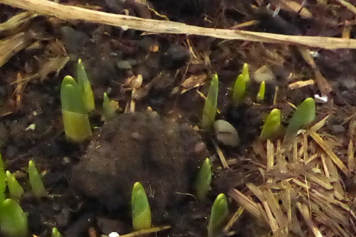 green shoots of growth