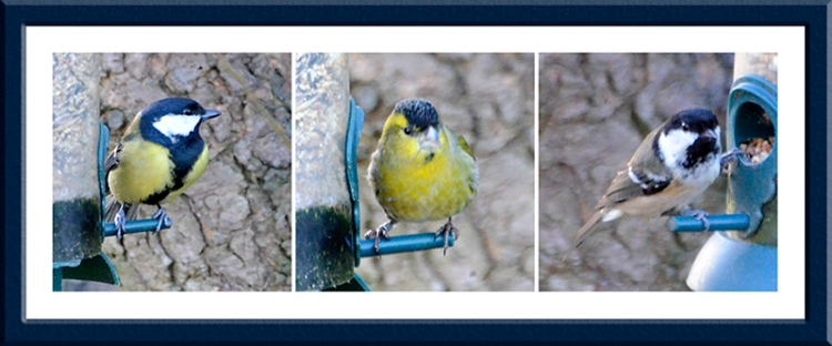 great tit, siskin and coal tit