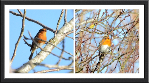 riverside robins