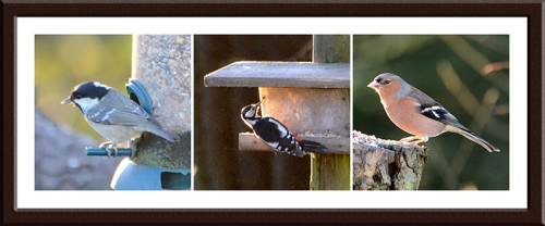 coal tit, woodpecker and chaffinch