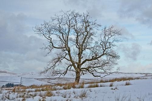 Bare Tree Whitshiels track
