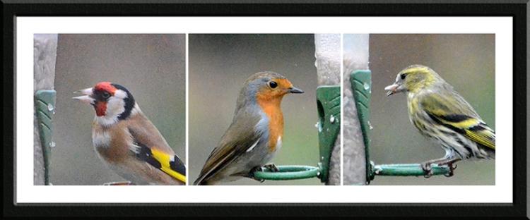 goldfinch, robin and siskin