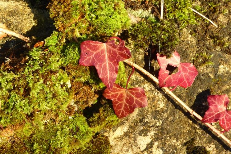 Colour among the moss
