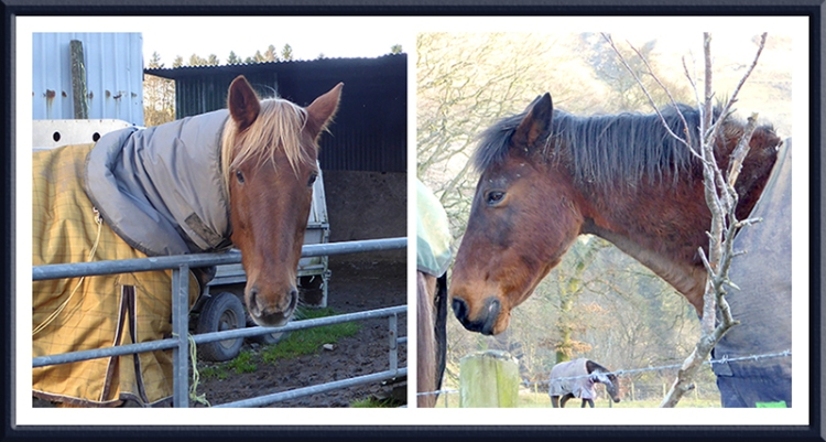 Stubholm horses