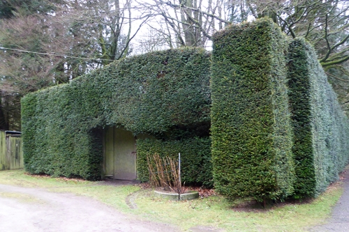Langholm Lodge hedge