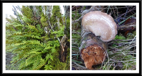 ferns and fungus