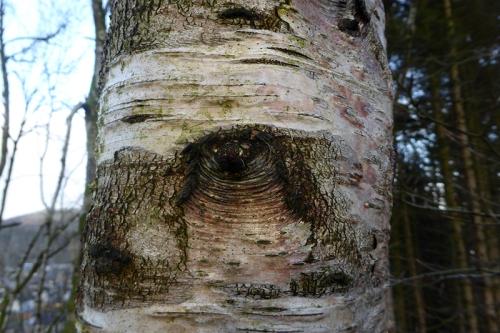 Tree with an eye
