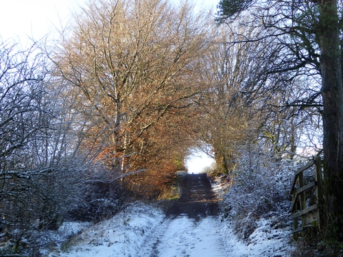 Track to meikleholm hill