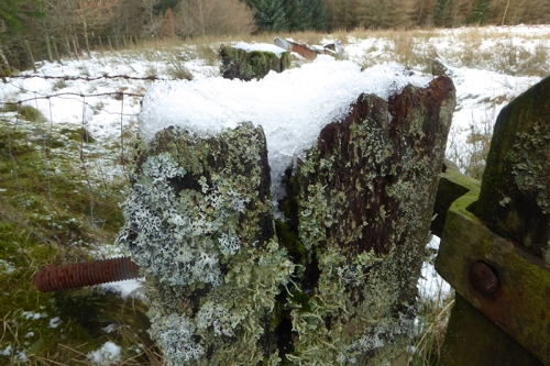 gate post with lichen