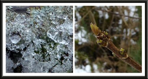 ice and bud