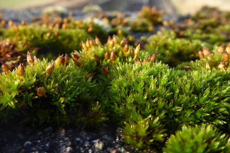 Moss at Gretna