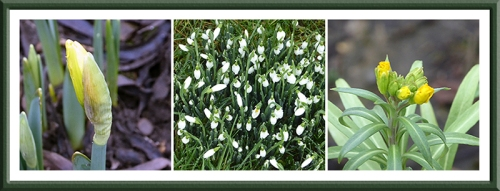 daff, snowdrop and wallflower