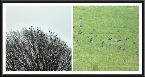 A tree with starlings