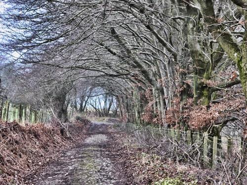 trees near pathhead