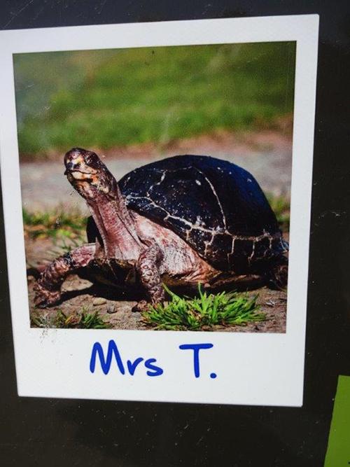 Mrs T