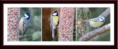 coal tit, great tit and blue tit
