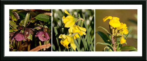 hellebore, daffodil and wallflower