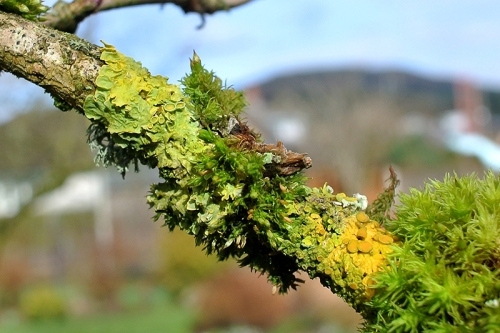 Elder lichen and moss
