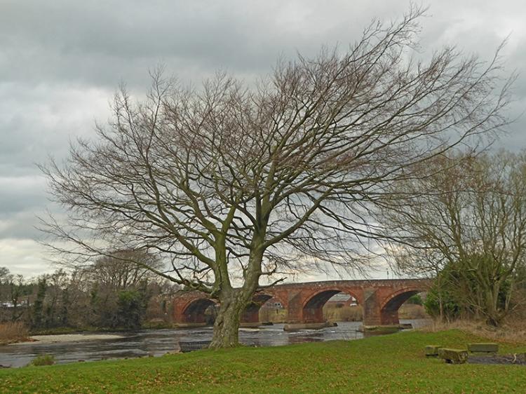 Tree at Longtown