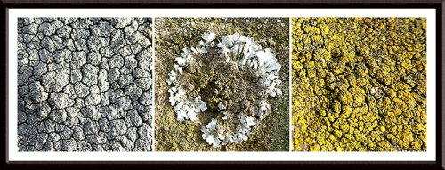 lichen on wall