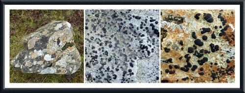 lichen on rock
