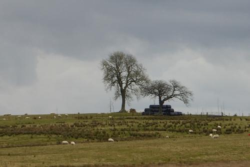 tree near chapelhill