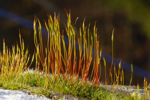 moss on wall at Ewesbank