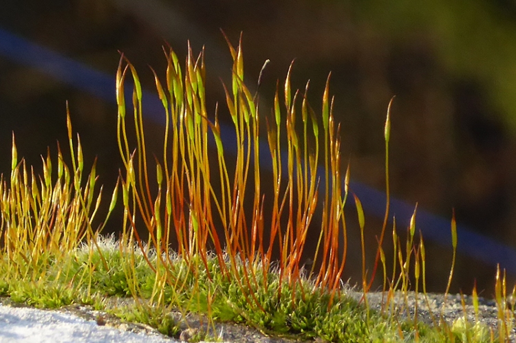 moss on wall at Ewesbank