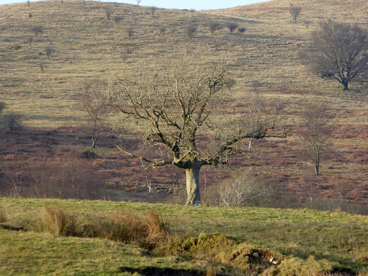 Tree below castle Hill