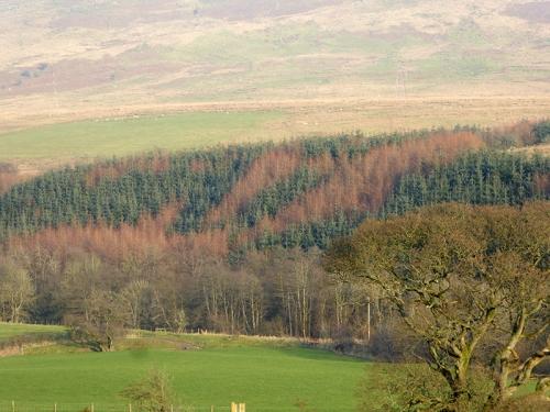 Whitshiels wood