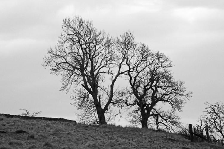 trees on Whita