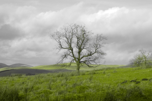 tree at Whitshiels
