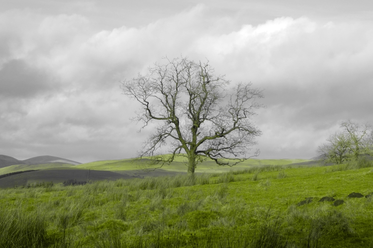 tree at Whitshiels
