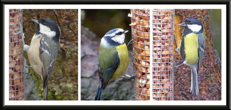 coal, blue and great tit