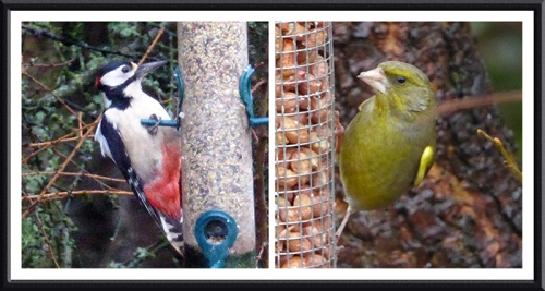 woodpecker and greenfinch