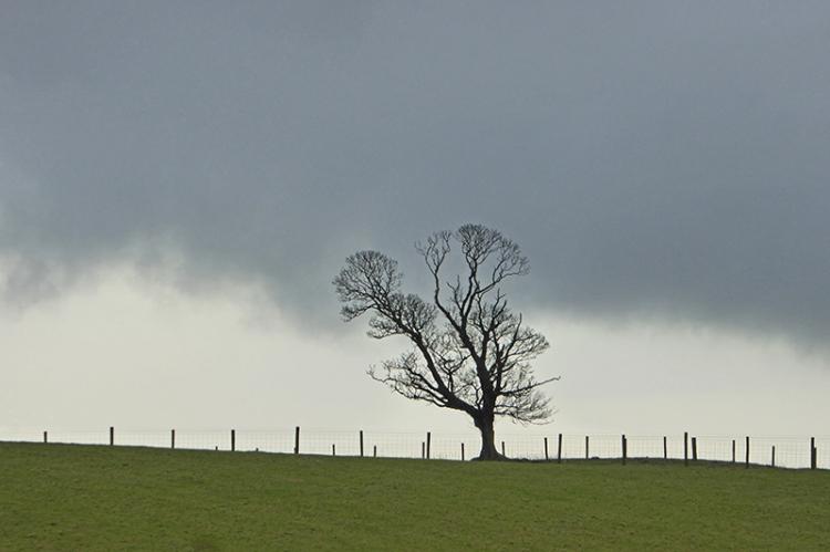 tree near Dunnabie