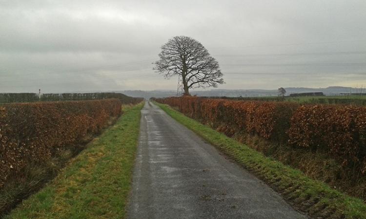 bare tree near Todhillwood