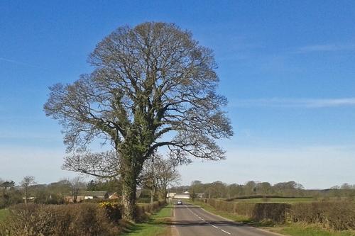 tree near smithfield