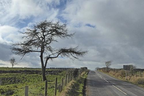 Falford tree